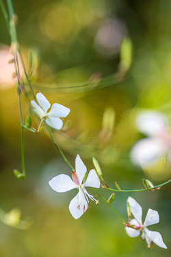 image du monde végétal — close-up