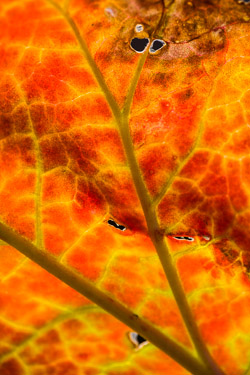image du monde végétal — close-up