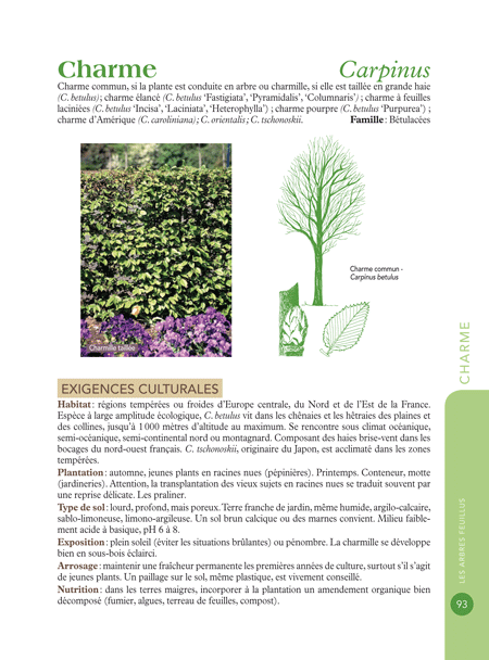 20100824_arbres_01.png