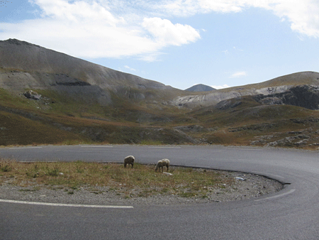 casernes, moutons