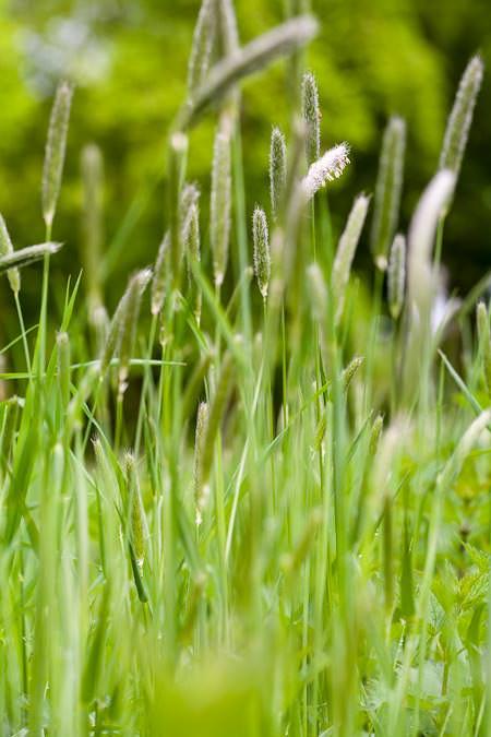 herbes folles…