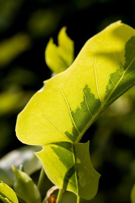 Vert sur vert, deux couleurs dans les feuilles…